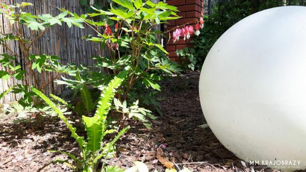 Ogród w stylu leśnym 2019