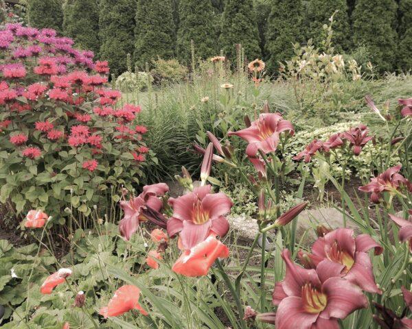 Ogród bylinowy, mm.krajobrazy
