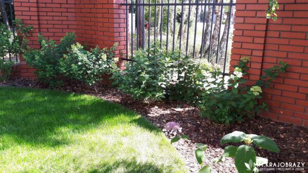 Projekt ogrodu w Leśnym stylu