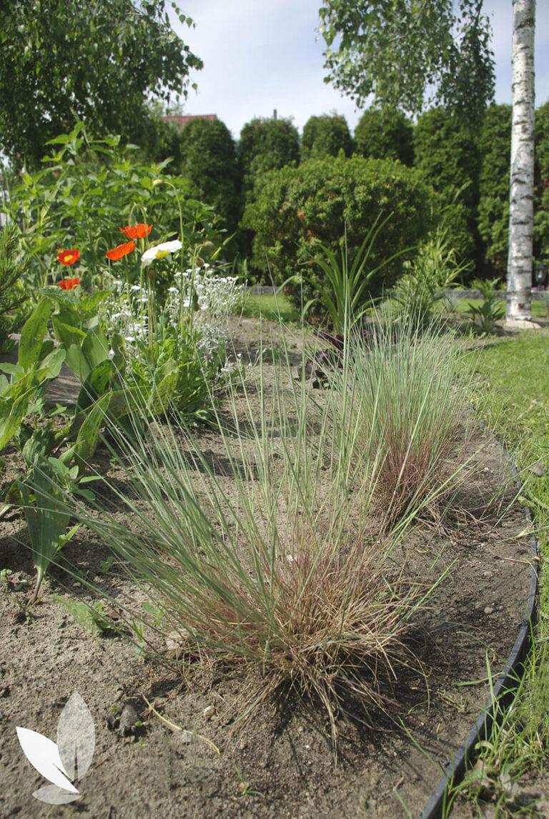 Ogród bylinowy Pomiechówek